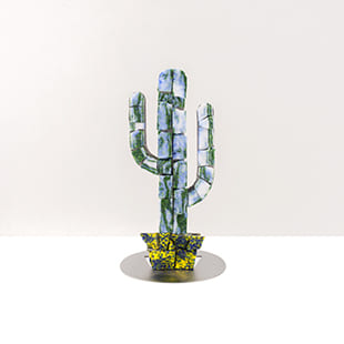 cactus mini colorado greenblue